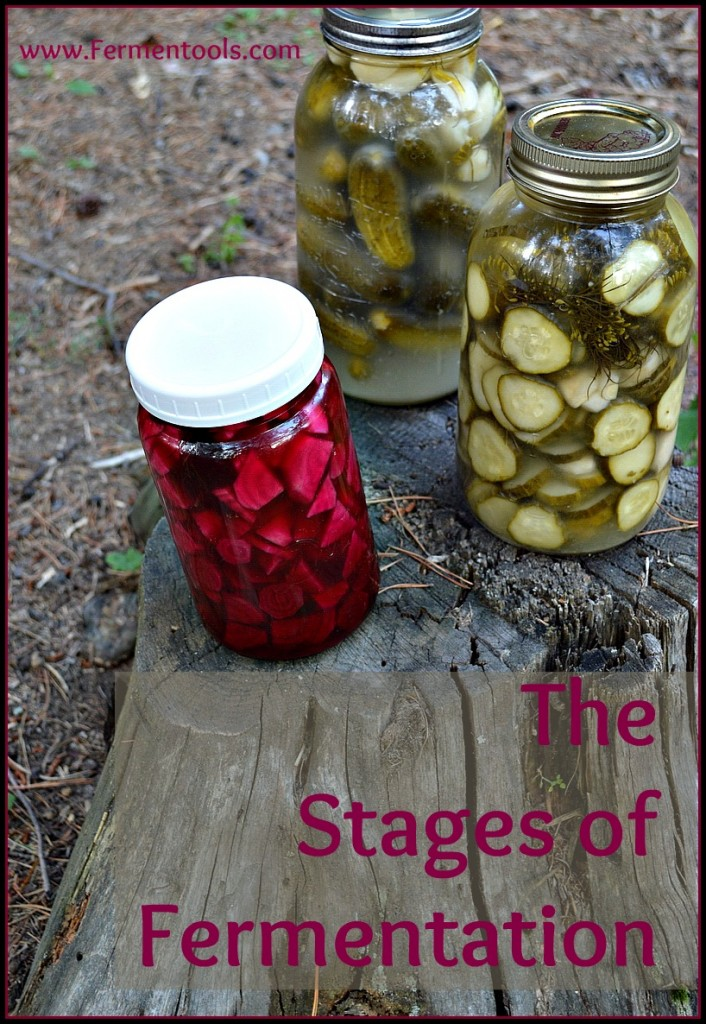 stages of fermentation
